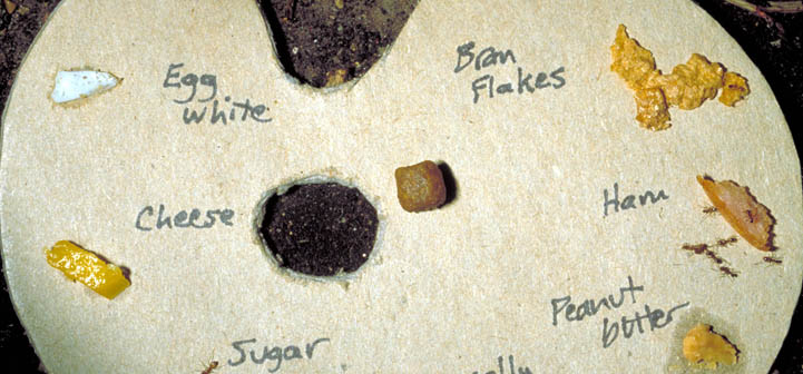 "A fire ant food ""palette."""