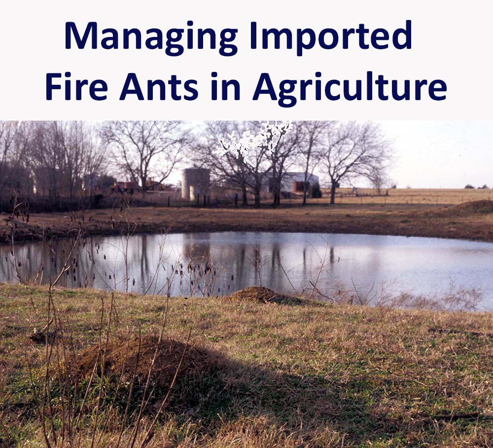 image of fire ant mounds around a farm pond, with a set of farm buildings in the background