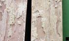 image of wood with tunnels from old house borer
