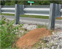Fire ant mound next to a highway guardrail.